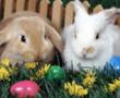 Paskalya Yumurta Bulmacası