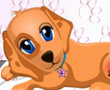 Köpek Sağlık Hizmetleri