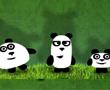 3 Panda Kardeş