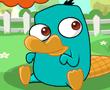 Bebek Platypus Bakım