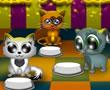 Kedi Restoranı