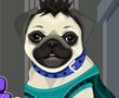 Benim Pug Hayvan Bakımı ve Giydirme
